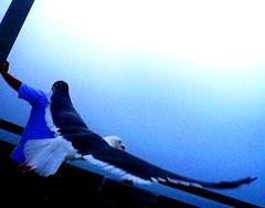 Man covered by majestic bird (Beauty Hunter...) Tags: ocean man bird seagull gull soe smrgsbord digitalcameraclub platinumphoto theunforgettablepictures slbflying