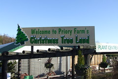 Priory Farm Christmas Tree Land #1
