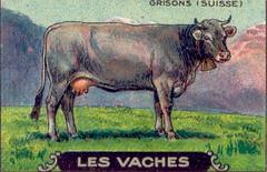 vachesuiss3