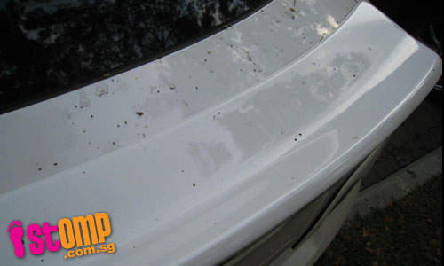 Look what caterpillars have done to my car!