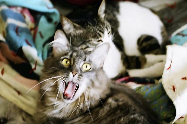 mochi yawn