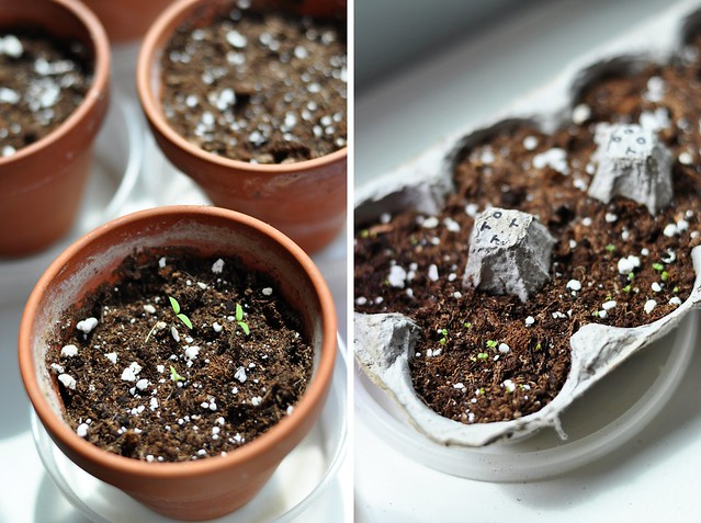 Seedlings - 2011