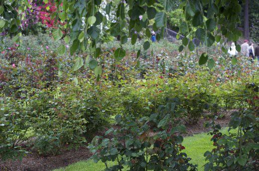 test garden