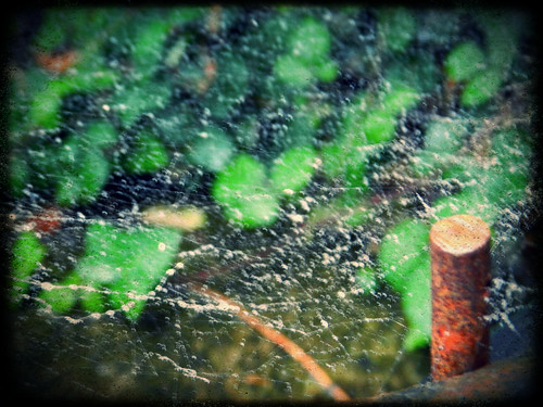 Rainy web with effects
