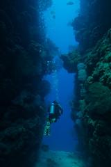 Roatan_0518_036 (nasadiver) Tags: ocean photography underwater scuba sealife diver aquatic scubadiver marineanimals ikelite