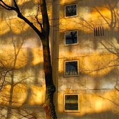 reflection (Werner Schnell (1.stream)) Tags: sunlight reflection tree facade nikon siegen werner ws schnell 35faves mywinners abigfave theperfectphotographer goldstaraward wernerschnell