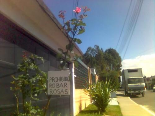 Prohibido robar rosas