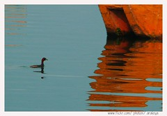 Tiny and Alone (Araleya) Tags: life leica morning nepal red mist lake abstract reflection water colors animal boat duck colorful asia mood alone peace silent artistic foggy peaceful atmosphere poetic cutie panasonic zen tiny memory lonely dailylife pokhara goodtimes orangeandblue southasia feelgood fz50 yuong fewalake beautifullife mediated beautfiul araleya saarc leicadigital theperfectphotographer