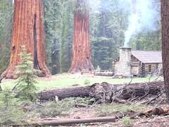 Mariposa Grove Museum, Yosemite