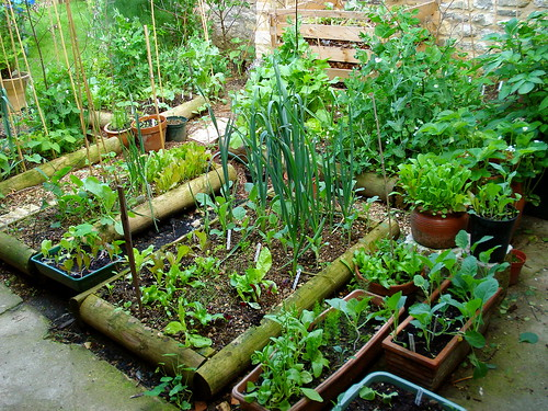 garden and compost