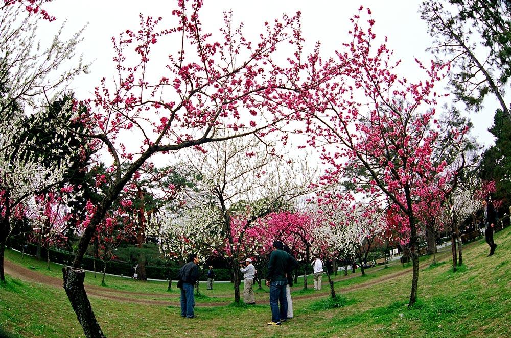 Sakura time (большие фото!)