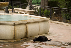 Thirsty Cat, Ronda (Winterspeak) Tags: plaza cats white black water fountain fauna cat de town spring spain feline europe maria may drinking andalucia sierra ridge espana spanish ronda andalusia 2008 malaga province provincial serrania auxiiliadora