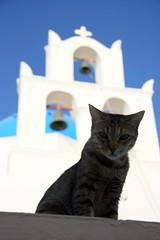 Oia, Santorini, Greece (elliotfreeman) Tags: cat santorini greece oia