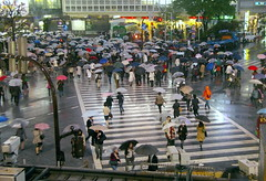 Shibuya (SBA73) Tags: people rain japan night japanese tokyo noche lluvia crossing cross gente crowd shibuya personas full zebra nippon  multitud umbrellas paraguas gent nihon kanto japoneses jap nit tokio japn peatones pluja paraigues cruzar persones peatons creuar mywinners japonesos aplusphoto flickrchallengegroup flickrchallengewinner
