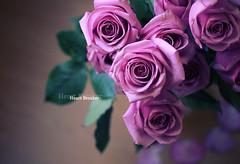..يا عساني ما انـحرم (heartbreaker [London]) Tags: pink flowers roses green love rose purple bouquet delicate