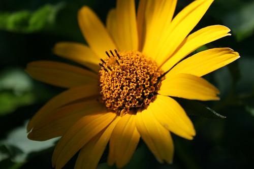 Nachmittags-Sonne im Juli
