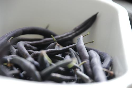 Dry beans.