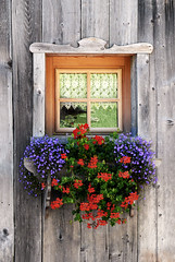 Flowering balcony (il Corsaro (away)) Tags: flowers fiori dolomites dolomiti sappada balconefiorito plodn ilcorsaro floweringbalcony