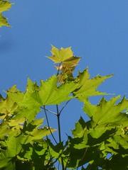 Make like a tree (lizette stenqvist) Tags: tree leav