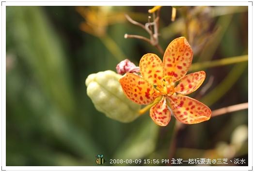 20080809三芝淡水全家遊 (5)