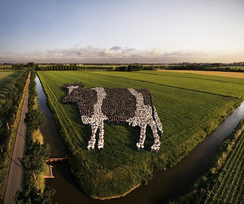 cowpeeps