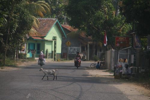 Ziegen und andere Tiere sind überall entlang und manchmal auch auf der Straße unterwegs