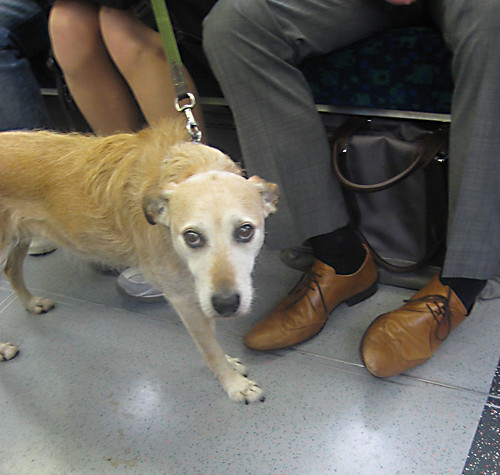 Dog on train 2