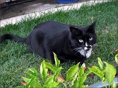 Sombra in the garden...