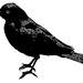 Creative Commons Free Clip Art