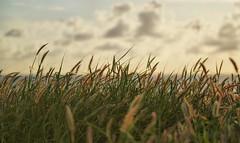 Field (Claryana) Tags: green field grass clouds challengeyouwinner photofaceoffwinner pfogold