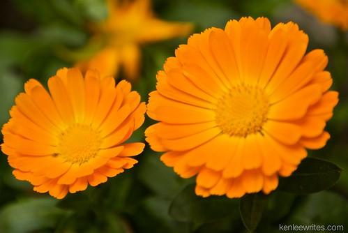 Ofuna Botannical Gardens  012