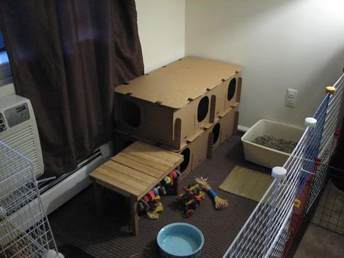 new bunny castle