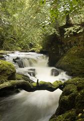 rumbling bridge gorge 36 (whisperwolf) Tags: trees water forest d50 scotland rapids gorge rumblingbridge