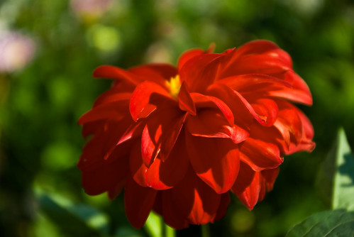 Lovely red flower