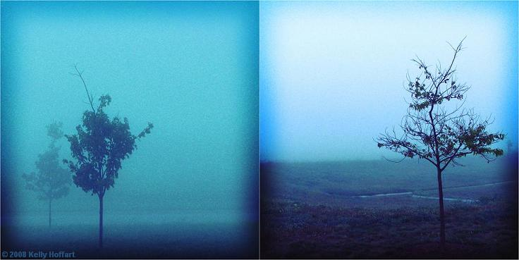 Diptych - Trees in Fog