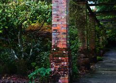 ~divide~ (Skink74) Tags: uk england plants 20d garden geotagged bricks columns hampshire growth hursley colonnade eos20d nikkor35f14 geo:lat=51025964 geo:lon=1400633 nikkor35mm114ai