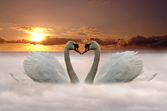 Swan Love in Explore (DDA / Deljen Digital Art) Tags: sunset mist love photoshop sunrise twins heart valentine romance created creation swans blended bled romantic imagination layers friday muteswan meher weekendlove mistywater