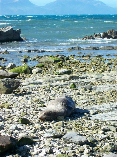 A seal chilling on the beach