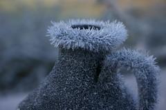 isig kanna (maj-lis) Tags: november frost icecrystal rimfrost iskristaller
