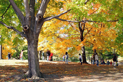 Central Park Fall -14
