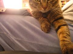 IMG_1586 (fadingembers) Tags: animals stormy kitties bigpurplehouse