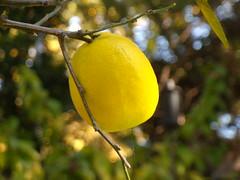 november citrus