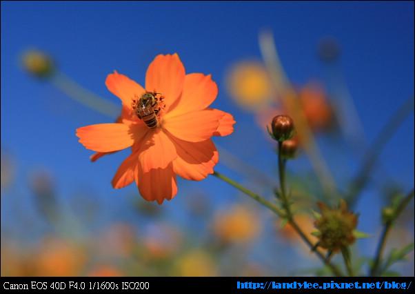 9711-新社花海:Date with Bee_101.jpg