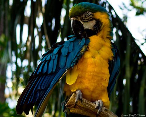 20081126_Bird2