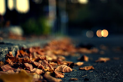 Collision Theory (NyYankee) Tags: autumn rome leaves 50mm lights bokeh f14 sanlorenzo nikkor