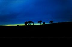 Na estrada eu vi... (sis Martins) Tags: blue azul contraluz landscape sonnenuntergang autobahn paisagem prdosol estrada viagem blau 2008 landschaft bume baum reise rvores tbingenberlim