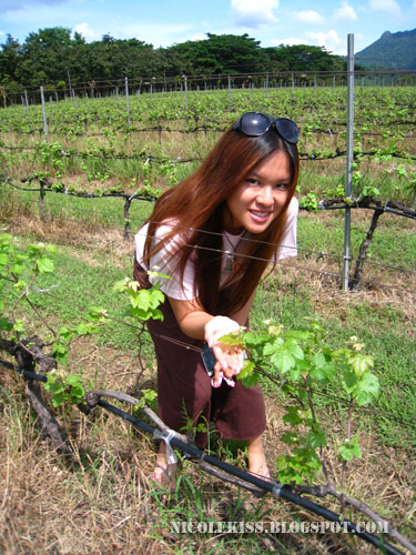 PB valley vineyard