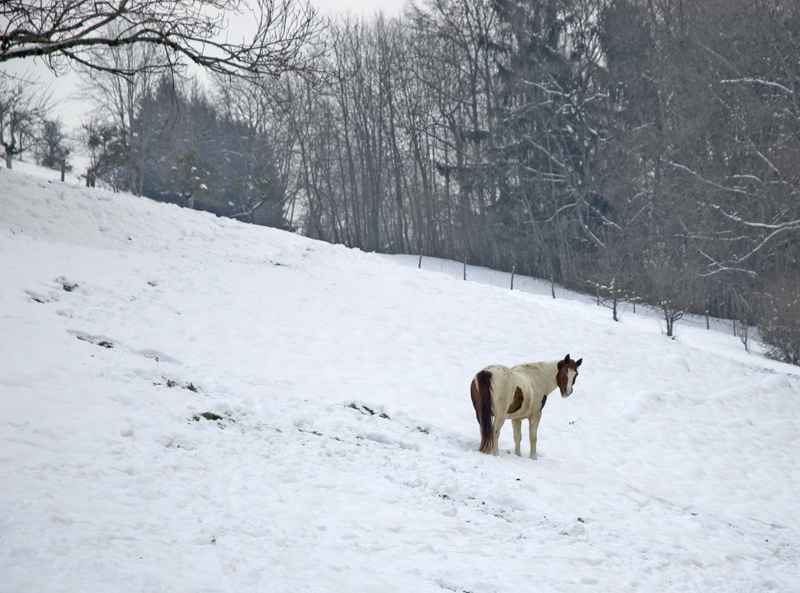 "by joanna: I was thinking of the playful horse who seemed to be enjoying the solitude.  He looked as if telling me ""what are ya looking at?"" and didn't wanted to be bothered."