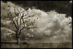 the migration (biancavanderwerf) Tags: tree texture birds clouds landscape dead bianca migration dreamcatcher graphicmaster