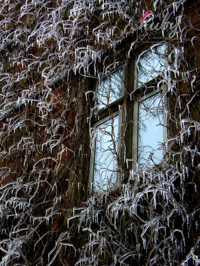 Freezing_rain_03